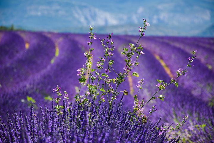 Provence Beitrag