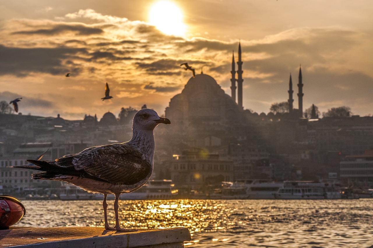 Istanbul beitrag